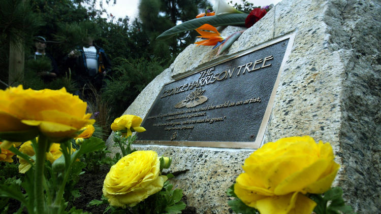 George Harrison Memorial Tree killed ... by beetles; replanting due - LA Times