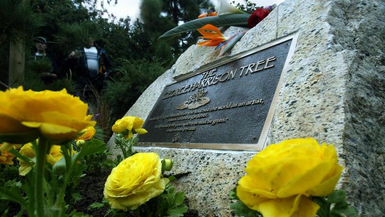 George Harrison Memorial Tree killed ... by beetles; replanting due - LA Times