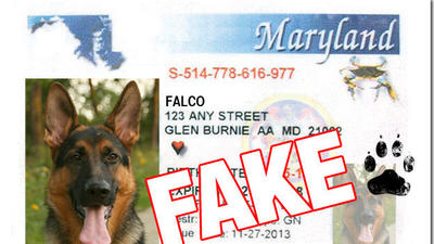 Faked drug-dog certification puts Baltimore drug-money forfeiture at risk
