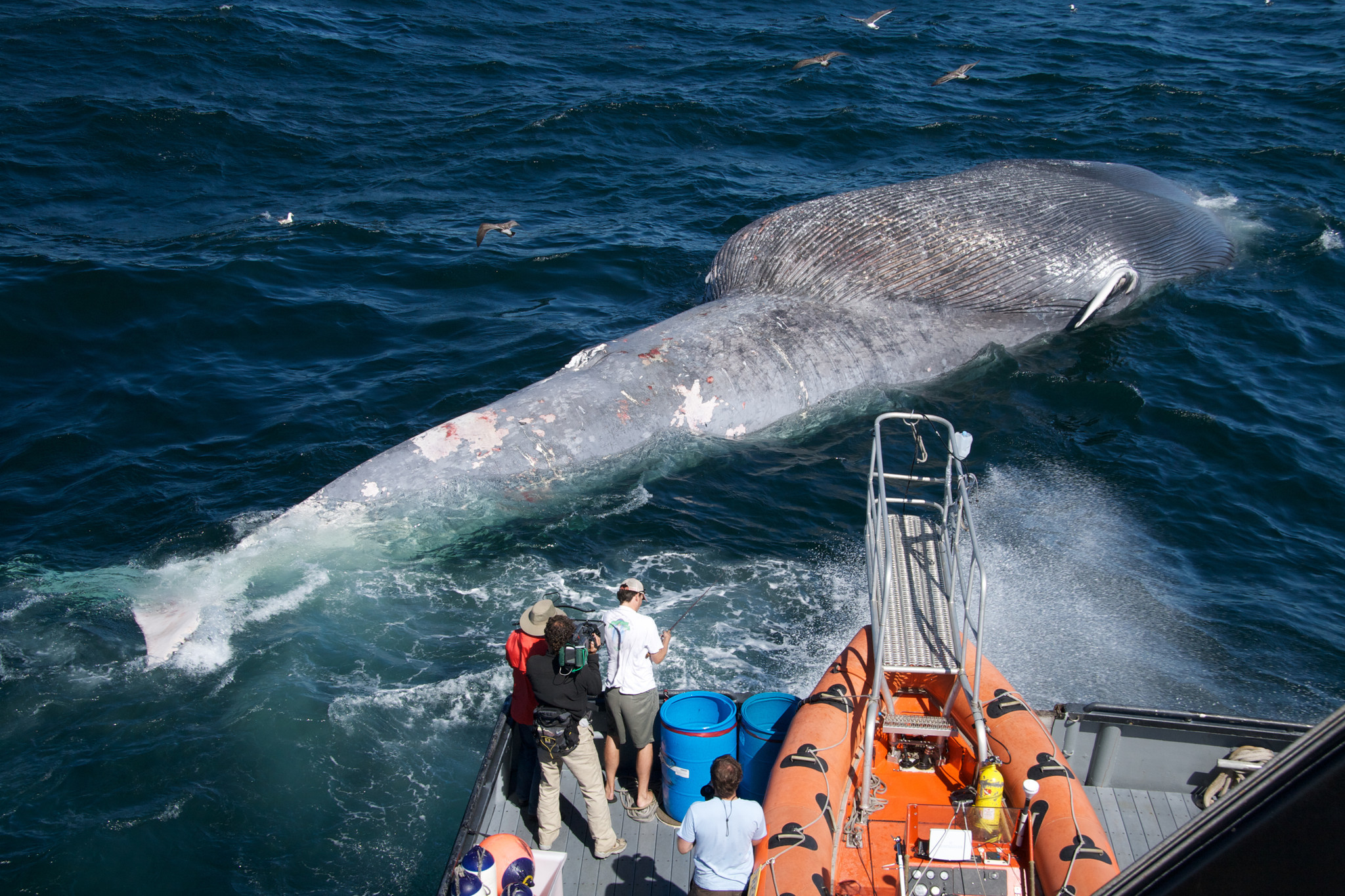 Ships and blue whales on a collision course off California coast
