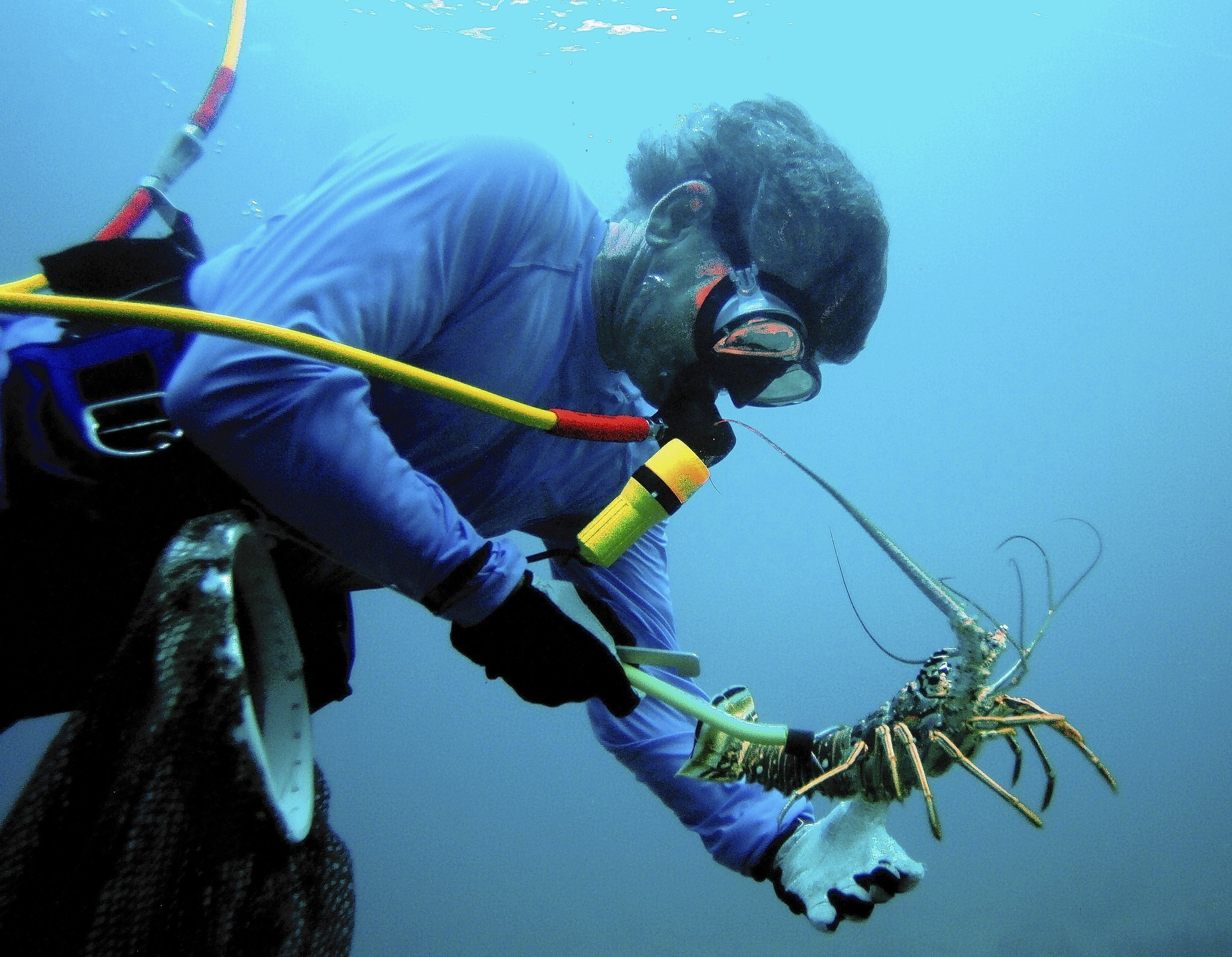 Florida lobster mini season can be deadly for divers who are not florida lobster mini season can be deadly for divers who are not prepared sun sentinel 1betcityfo Gallery