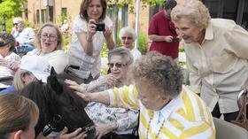 Miniature horses delight seniors