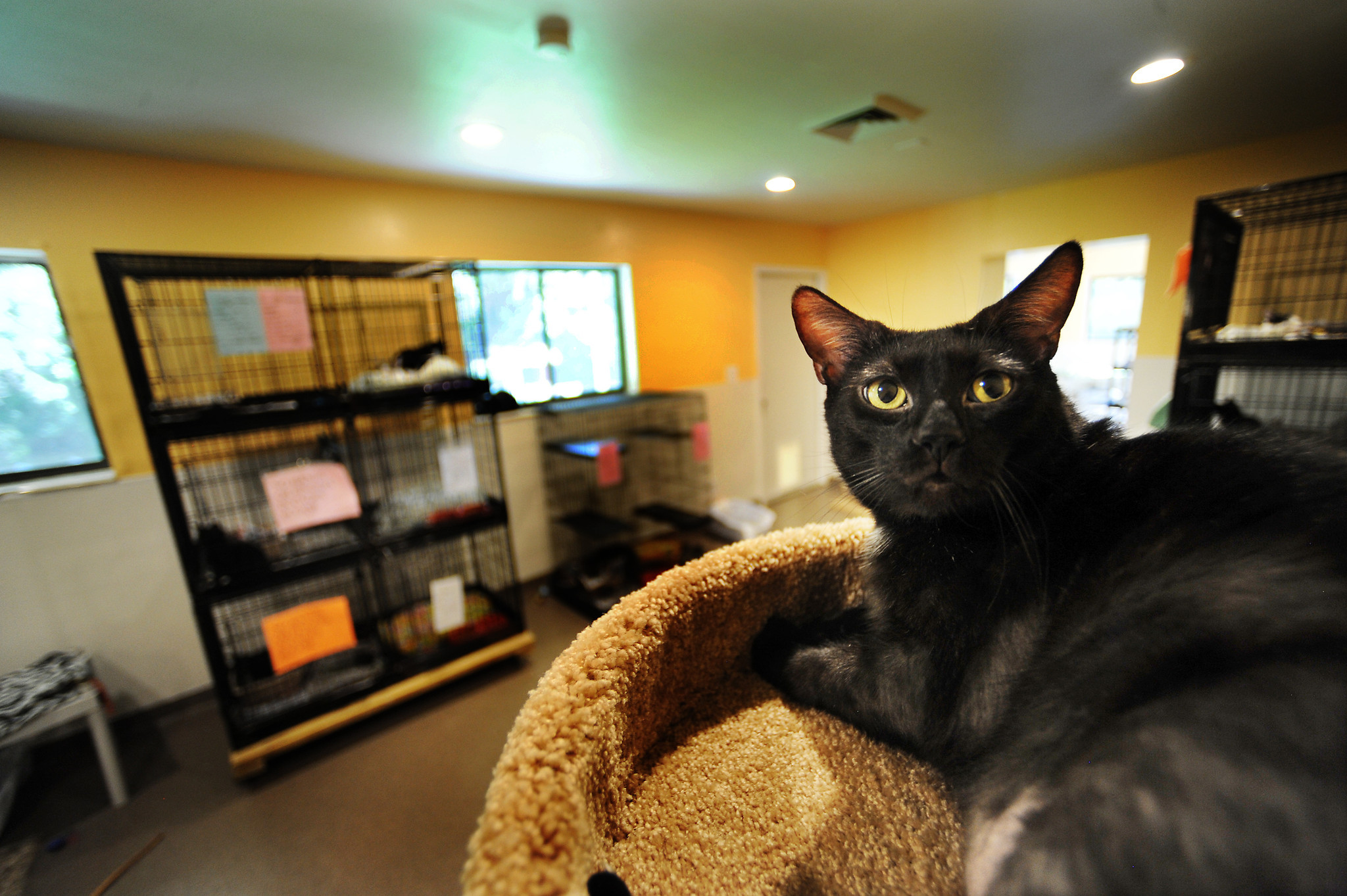 Updated Cat Room Debuts At Tri County Animal Rescue Sun