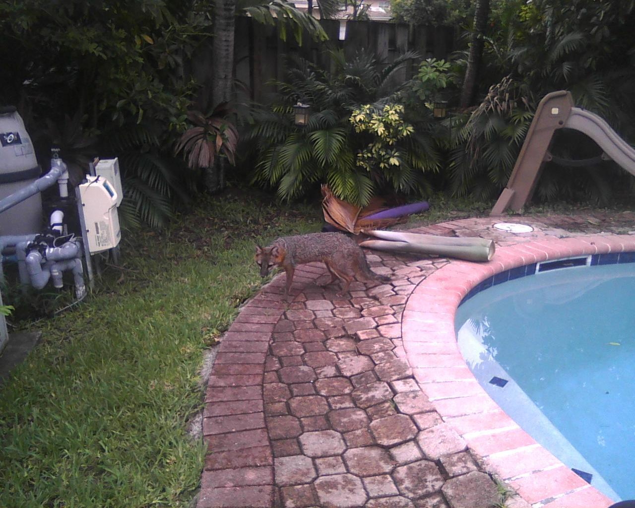 For South Florida homeowners, it's a jungle out there