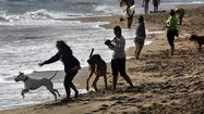 Boca's Dog Beach here to stay