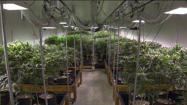 City Council to adopt new rules for sales of legal marijuana in Chicago