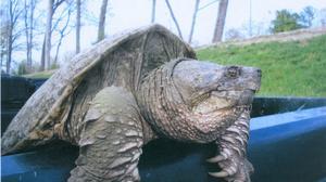 From bats to birds to beavers, Wildlife Control of Virginia traps nuisance wildlife