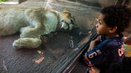 Lincoln Park Zoo: 8 reasons to love it