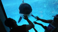 Southwest Airlines, SeaWorld ending partnership