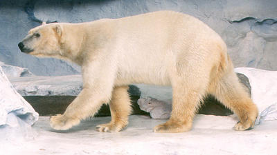 SeaWorld Orlando: Polar bear dies unexpectedly