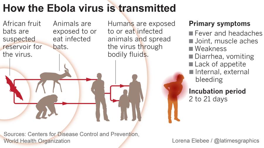 Ebola virus transmission and symptoms