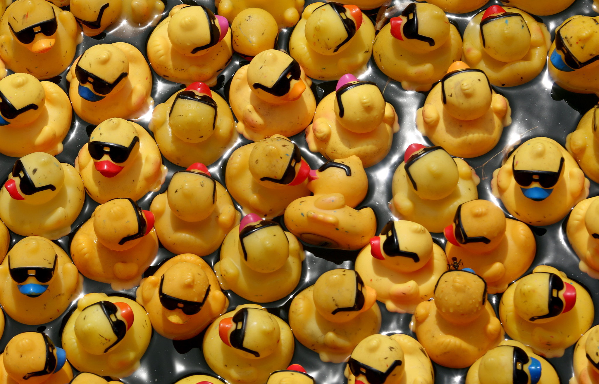 Rubber Duck Derby hits Chicago River - Chicago Tribune