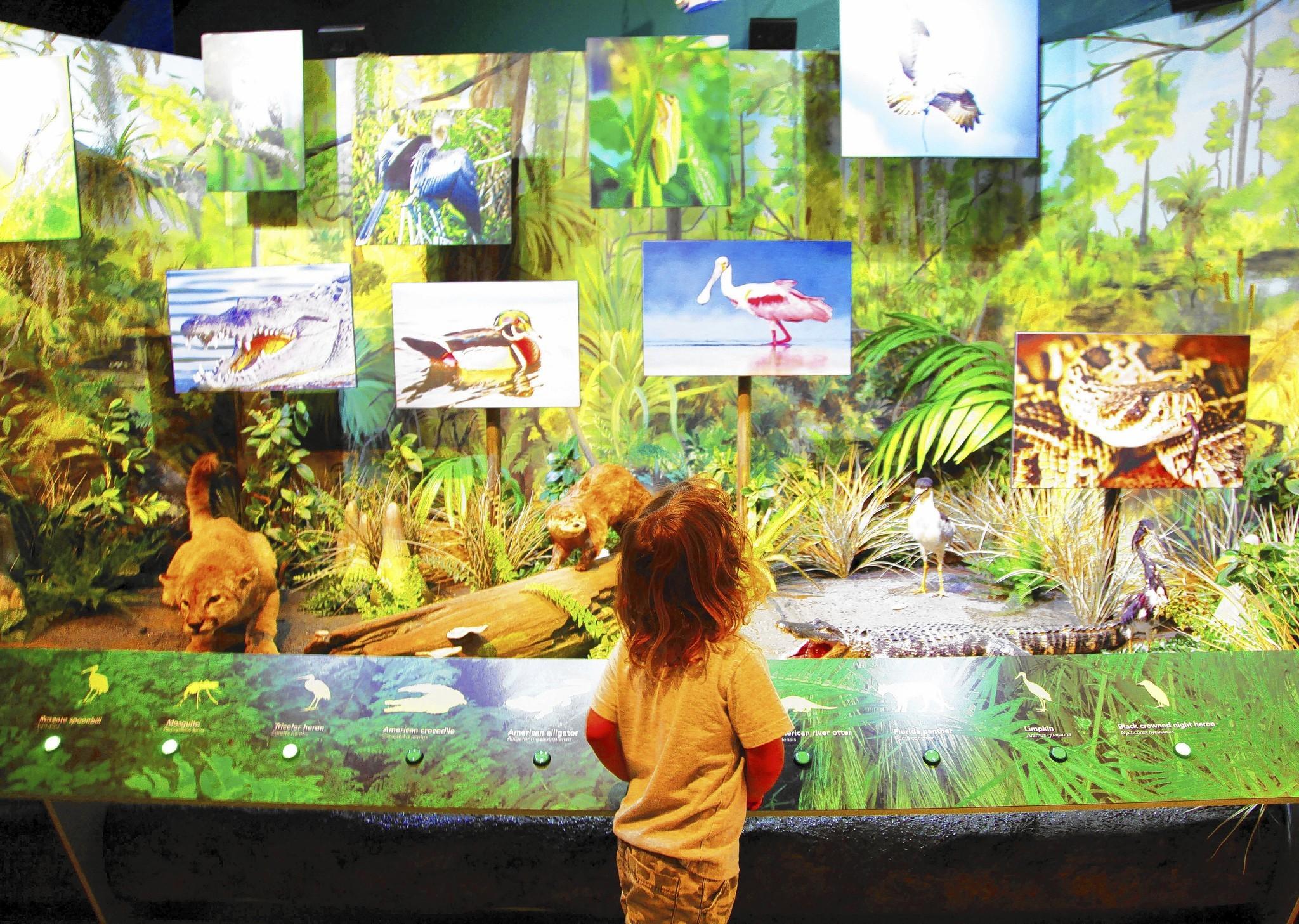 South Florida Science Center And Aquarium Orlando Sentinel