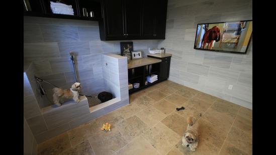 Pet suite