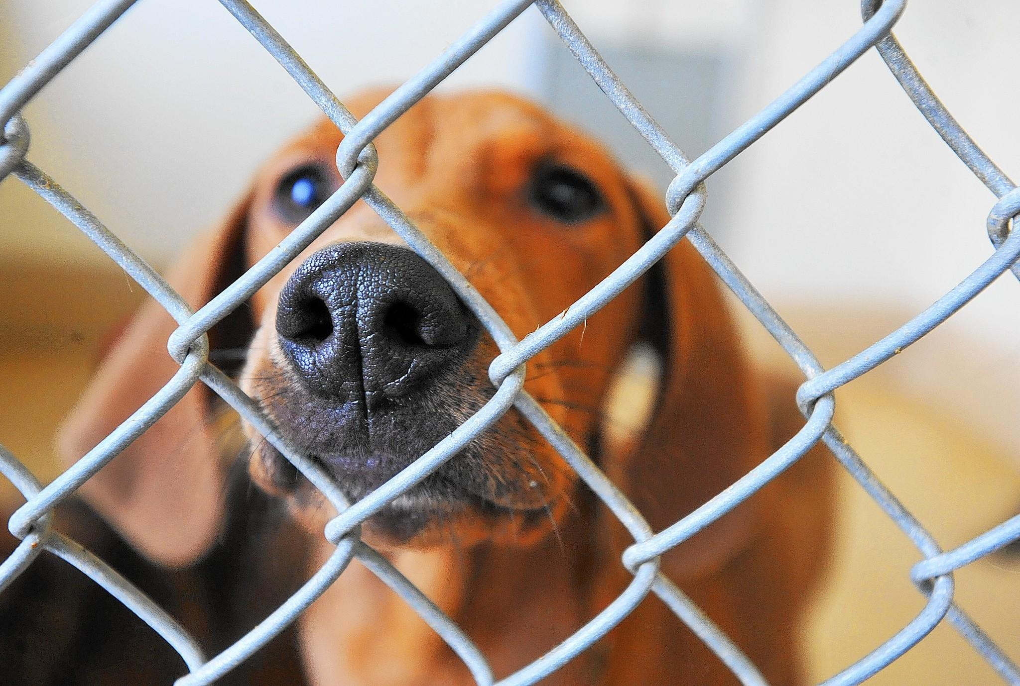Animal rights' lawsuit targets Pennsylvania's use of wire mesh floors in dog cages.