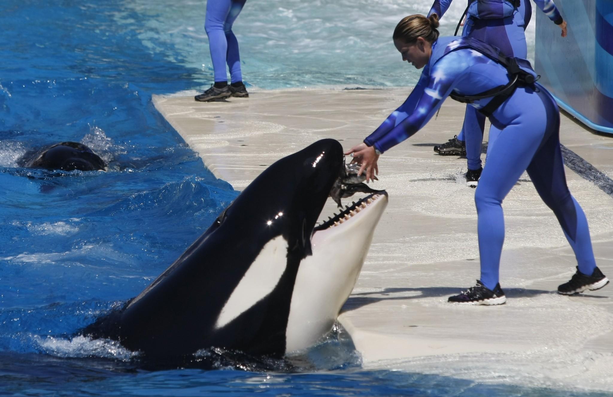 Amid \u0027Blackfish\u0027 backlash, SeaWorld to expand orca environments ...