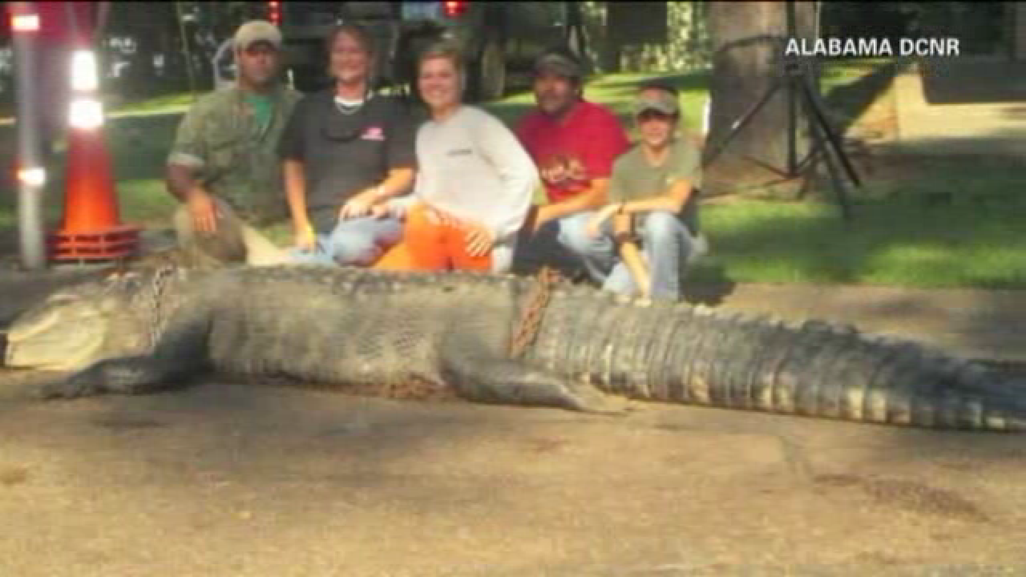 family catches record breaking 15 foot alligator chicago tribune