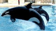 SeaWorld could face legal action from investors