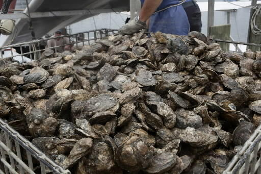 A new Virginia Oyster Trail campaign launched Tuesday by Gov. Terry McAuliffe is meant to connect Chesapeake Bay oysters with the watermen who harvest or farm them, the raw bars and restaurants that sell them, and the Virginia wines that can pair with them, the governor's office said.