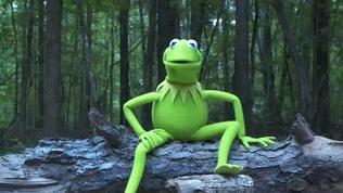 Video: Kermit the Frog ALS Ice Bucket