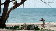 Review: 'Island of Lemurs: Madagascar' ★★&#9733 1/2