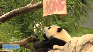 National Zoo celebrating Panda's first birthday [Video]