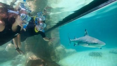 Discovery Cove: Florida-resident deal includes SeaWorld, Aquatica access