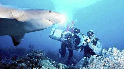 World-renowned photographer to teach underwater photography class in Westminster