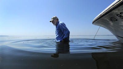 Susquehanna Flats show hope for Bay