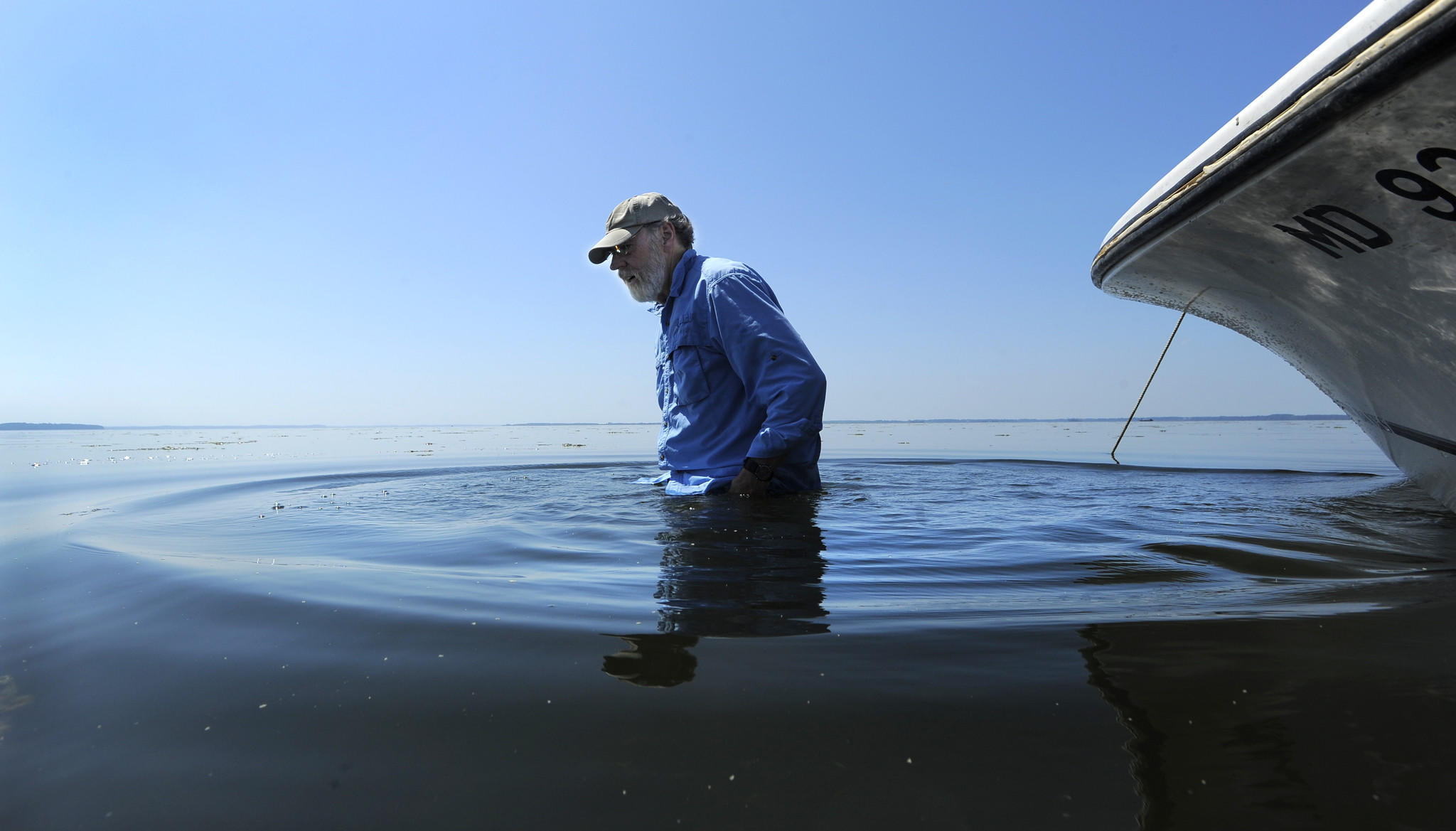 W. Michael Kemp, a professor at The University of Maryland Center of Environmental Science, examines grasses underneath the surface of the water at the Susquehanna Flats.