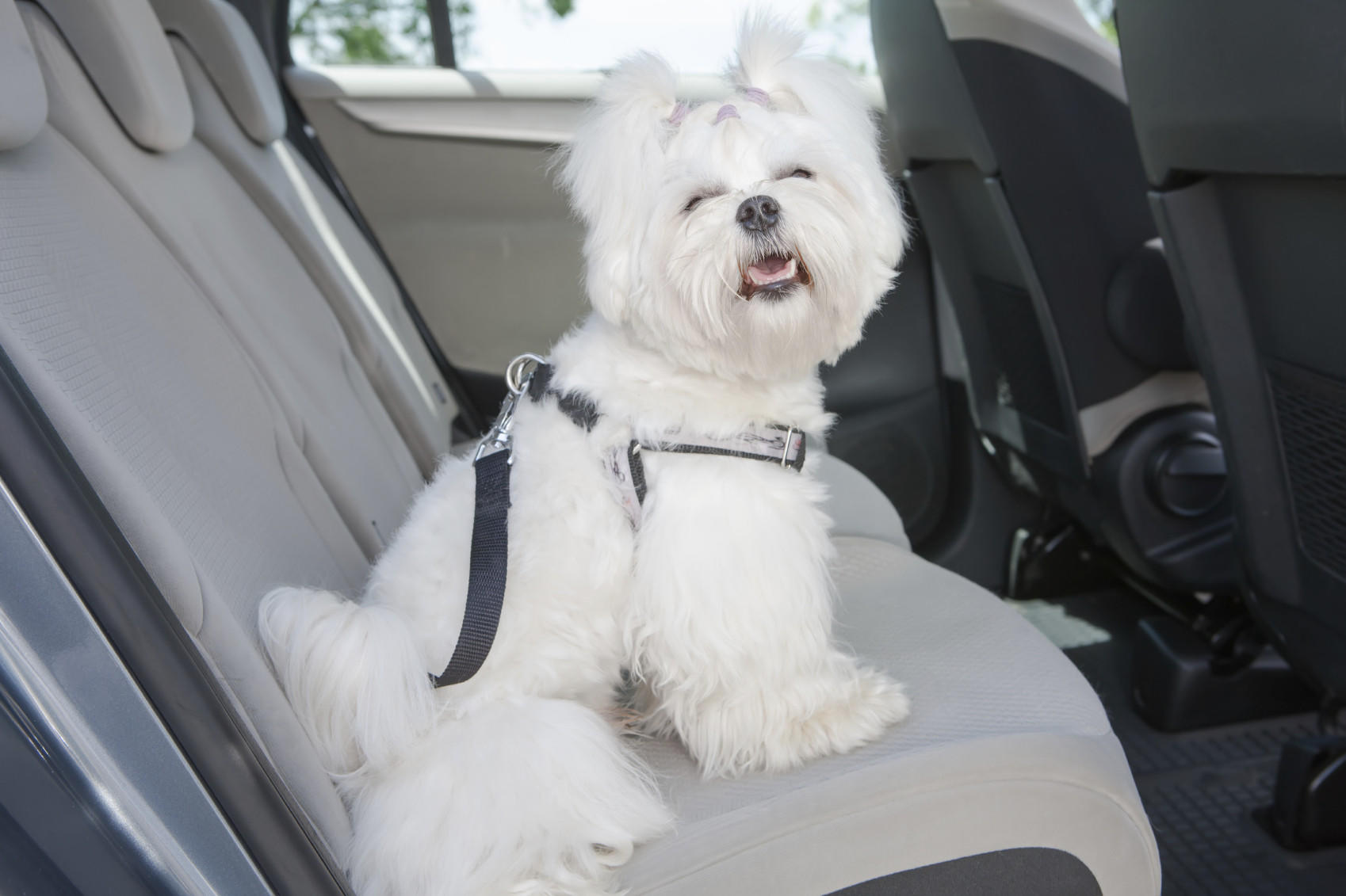 Dr. David Tayman advises pet owners to secure animals in crates, carriers or harnesses when traveling in the car.