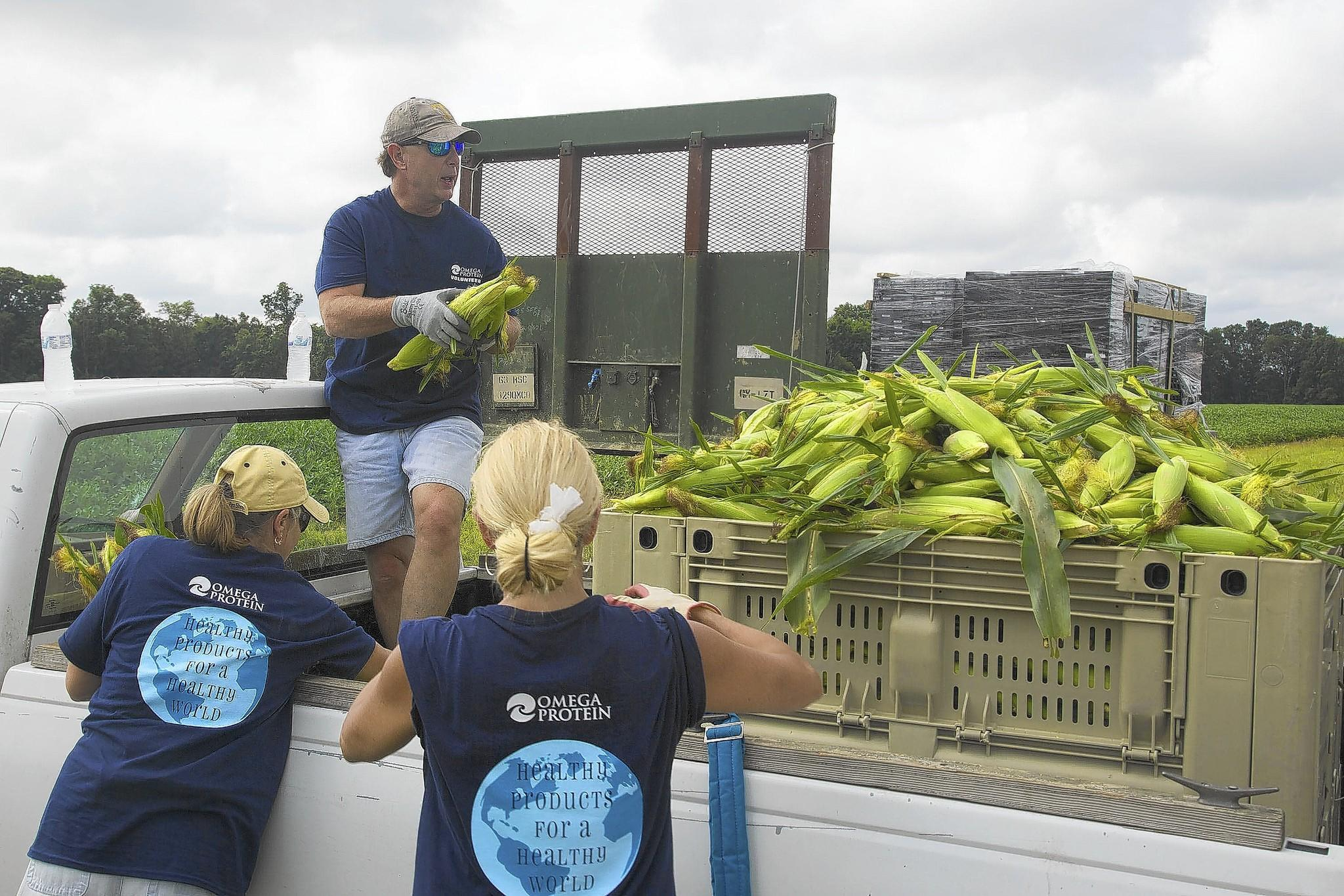 Gary Caldwell, quality assurance manager at the Omega Protein plant in Reedville, helps co-workers who volunteered to glean a local cornfield to supply regional food banks.