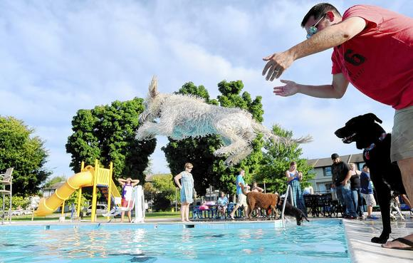Westminster Municipal Pool Hosts Pooch Pool Party