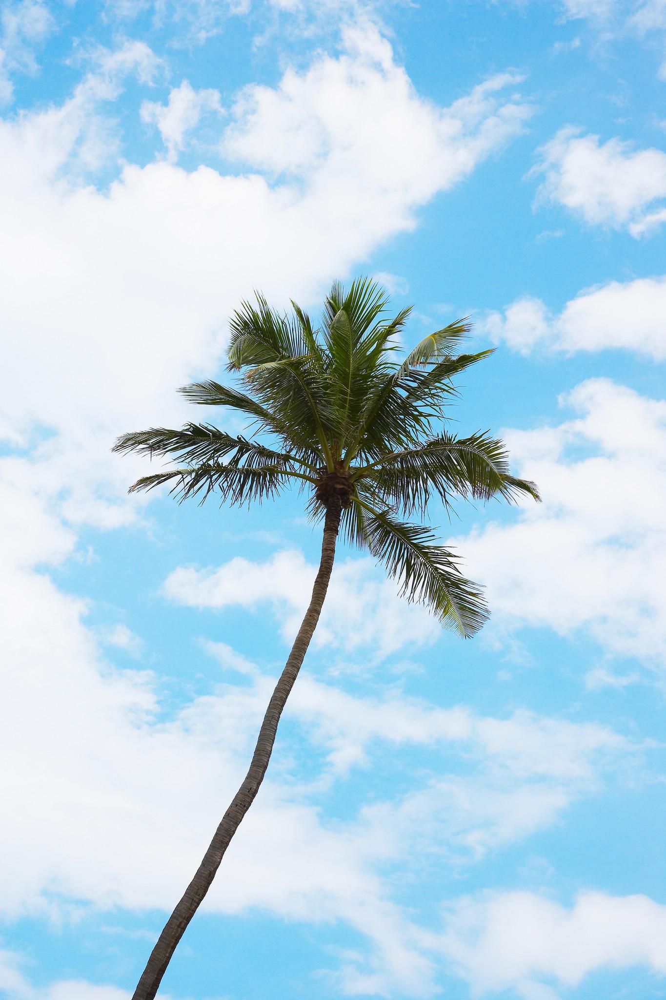 Free trees available on Craigslist - tribunedigital ...