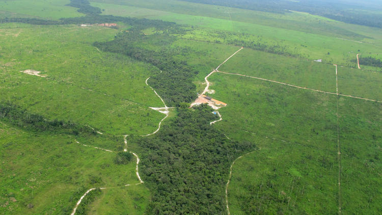 Rainforest of Maranhao