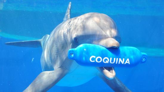 Marineland - Coquina