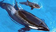 More SeaWorld Orlando coverage