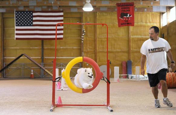 Dog Agility Training Baltimore
