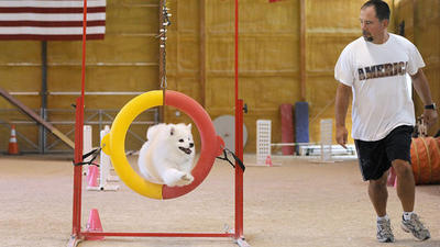 Canines, owners team up to compete in dog agility contests