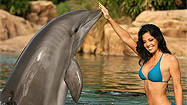 Dolphins cheerleaders swimsuit calendar pictures at SeaWorld Discovery Cove