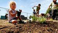 A new crop of school gardens