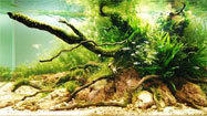 Underwater gardens: Award-winning planted aquariums