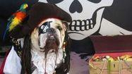 Photos: Why pets hate Halloween