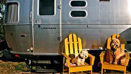 At last, RVing is for the dogs