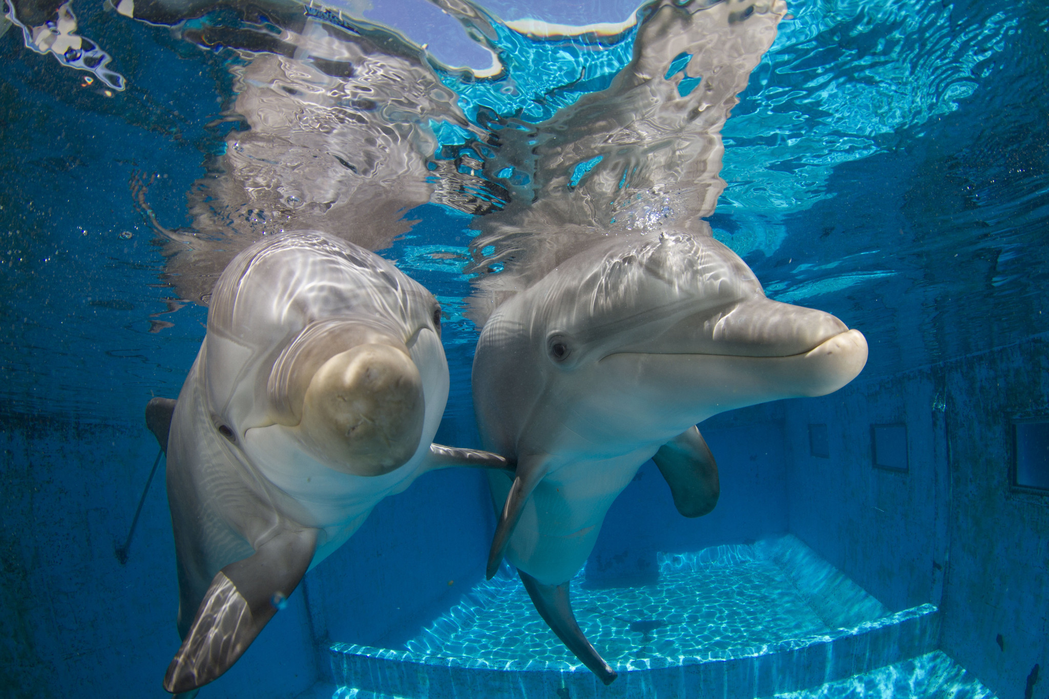 'Dolphin Tale 2' introduces new stars at Clearwater, Fla., aquarium