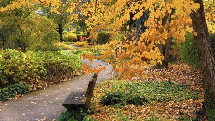 Fall at Morton
