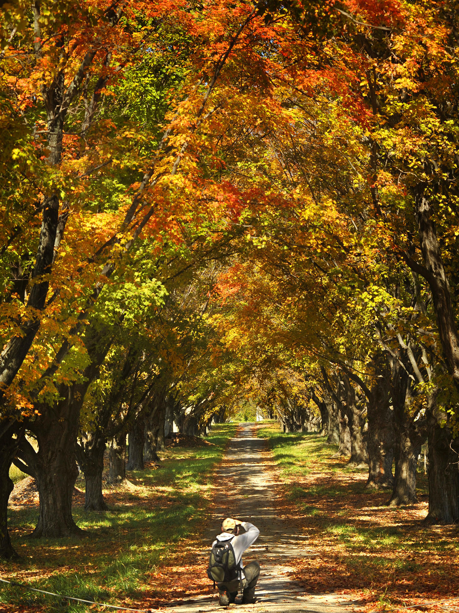 Christopher Walls of Owings Mills was returning from a trip into Pennsylvania for photograph fall colors when he found this arbor of trees on Shawan Road, at the site of Baltimore County's future Agricultural Center.