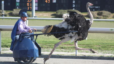 Pictures: Camel and ostrich races at Colonial Downs