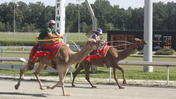 Video: Camel and Ostrich races at Colonial Downs