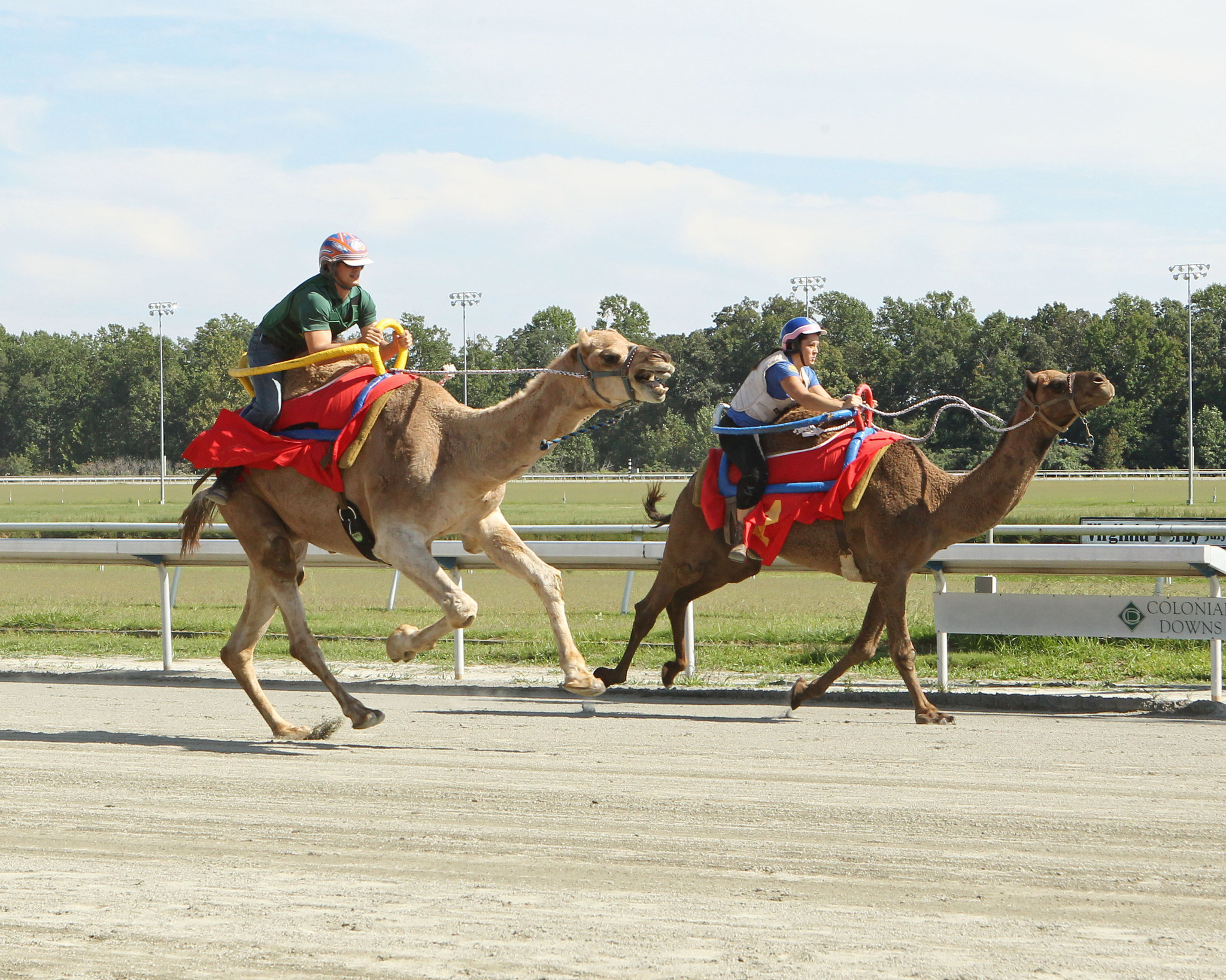 sunday racing at colonial downs highlighted by camel and